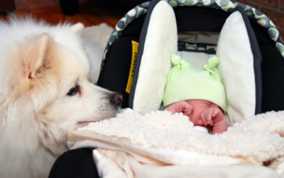 Exact Steps To Get Your Dog Prepared For Infant