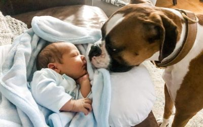Don't Introduce Your Dog and Newborn Like This