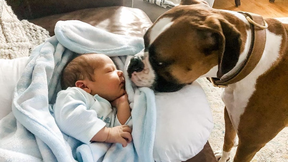 The Wrong Way To Introduce Your Dog and Newborn