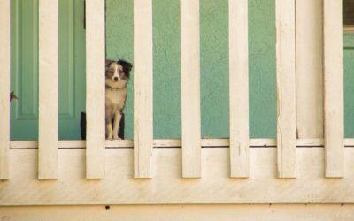 Ways to Involve Your Dog With Newborn