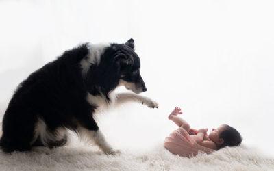 Start Preparing Your Dog For An Infant ASAP