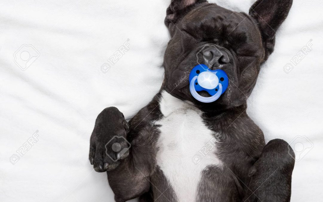 Dog Keeps Chewing the Baby Toys!