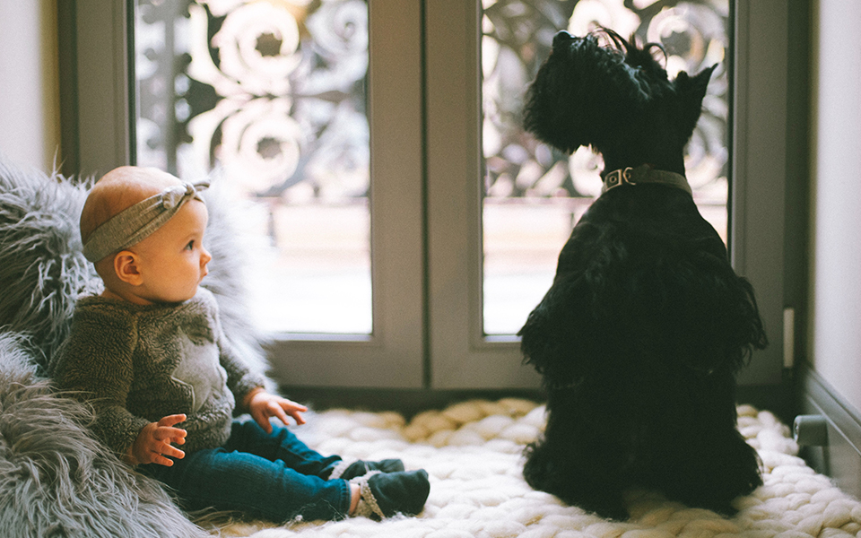 Stages of Your Baby's Development and How It Pertains to Your Dog