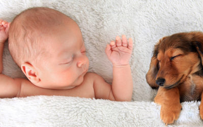 Common Assumptions | Dogs and Newborns