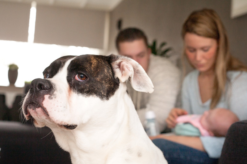 Preparing Dogs for Newborns | Checklist