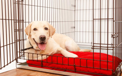 Dogs, Crates, and Kids