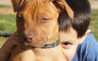 Pit Bulls And Babies | Interview