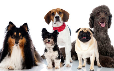 The 3 Most Dangerous Dogs | Infants and Toddlers