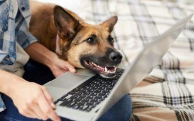 Dog's Virtual Nightmare | COVID Homeschooling